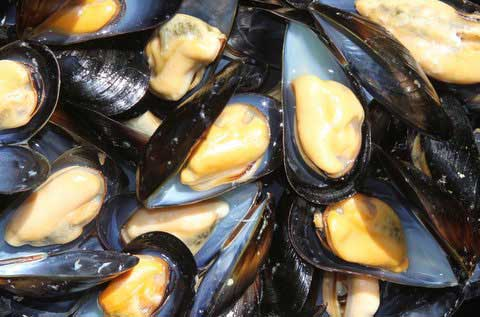 Steamed mussels fresh from the Santa Barbara Mariculture farm, looking plump, tasty, and ready to eat.